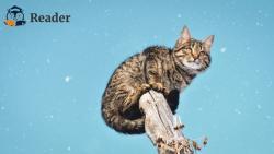 """Top 6 cuốn sách hay về mèo mà các """"con sen"""" không thể bỏ qua"""