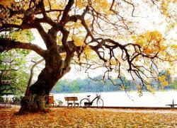 Cảm nhận vẻ đẹp bức tranh giao mùa trong bài thơ Sang Thu
